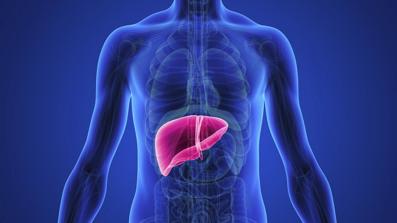 صورة درجات تليف الكبد وعلاجه , معلومات مفيدة لمرضى الكبد