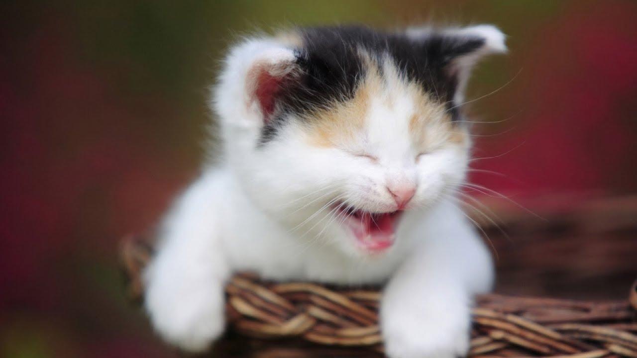 صورة صور مضحكة عن القطط , لقاطات نادره للقطط مضحكه جدا