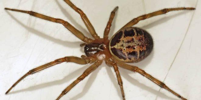 صور تفسير حلم عنكبوت , العنكبوت و ما يحمل من اسرار