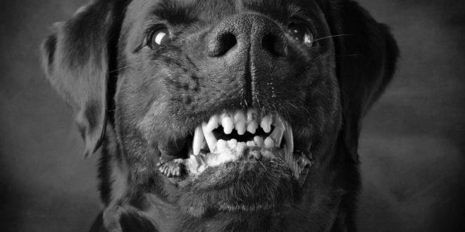 صور تفسير حلم عضة الكلب الاسود , الكلب الاسود شر لا محالة