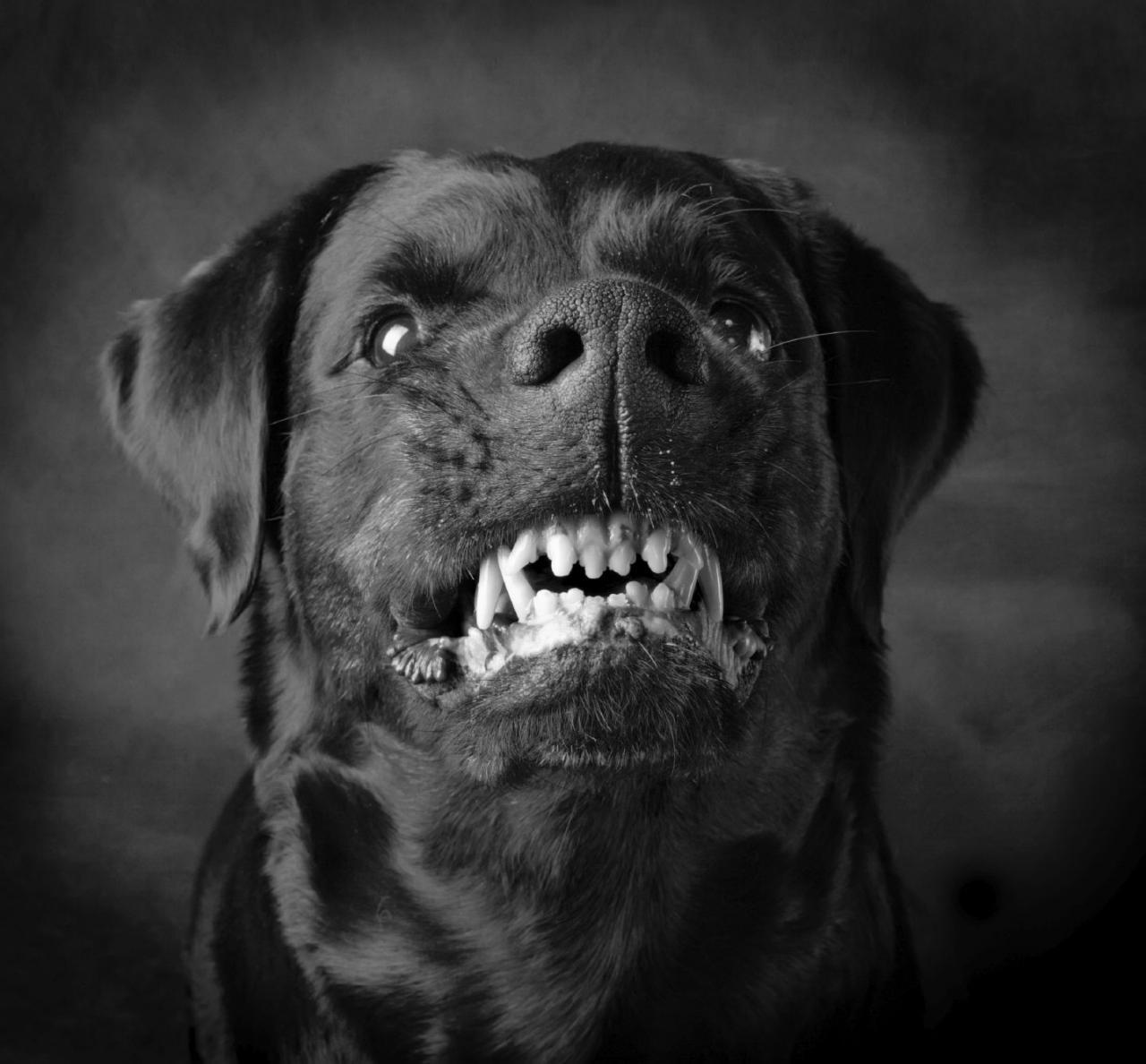 صورة تفسير حلم عضة الكلب الاسود , الكلب الاسود شر لا محالة