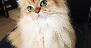 صور اجمل قط في العالم , لمحبى القطط اجمل البوستات