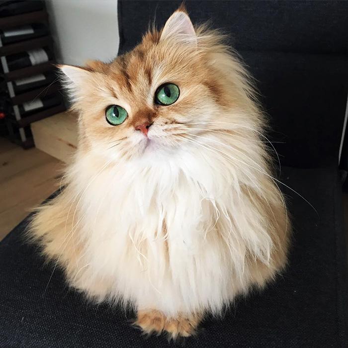 صورة اجمل قط في العالم , لمحبى القطط اجمل البوستات