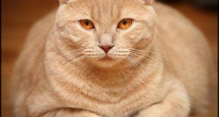 صورة ماذا يغطي جسم القطة , فروة لكل قطة