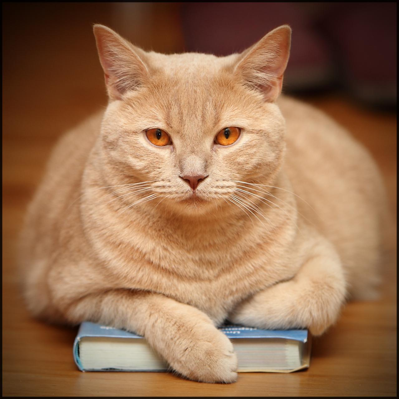 صور ماذا يغطي جسم القطة , فروة لكل قطة
