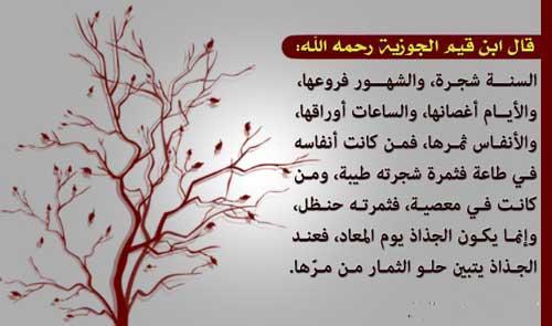صور حكمة عن الشجرة , حكم نادره ومعبره عن اهميه الشجر
