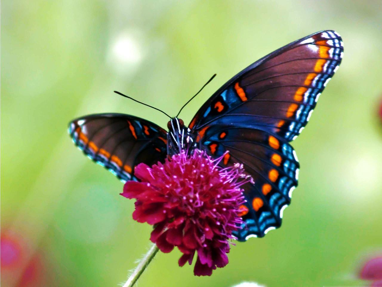 صورة تفسير رؤية الفراشة , ما هو تاويل رؤية الفراشه في المنام
