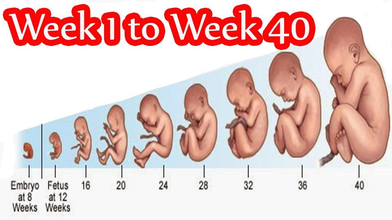 صورة الحمل والولادة بالصور , اجمل الصور والذكريات اثناء الحمل والولادة