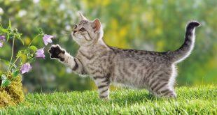 صور تفسير حلم قطة تهاجمني , تعرف على اعدائك فى الحلم