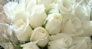 صورة تفسير حلم الورد الابيض , بشره خير هتفاجئك