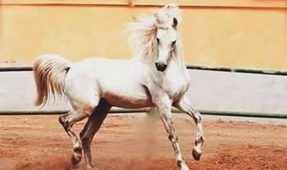 صورة اجمل حصان بالعالم , اجمد فرس في الدنيا