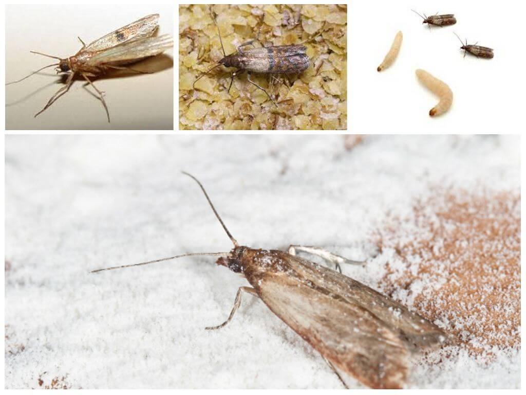 صورة التخلص من حشرة العث , كيف اقضي علي الحشرة اللعينة