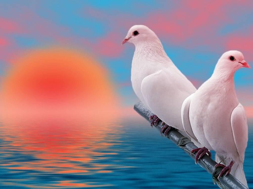 صورة طيور جميلة جدl , دعنا نتكلم عن احلى الطيور