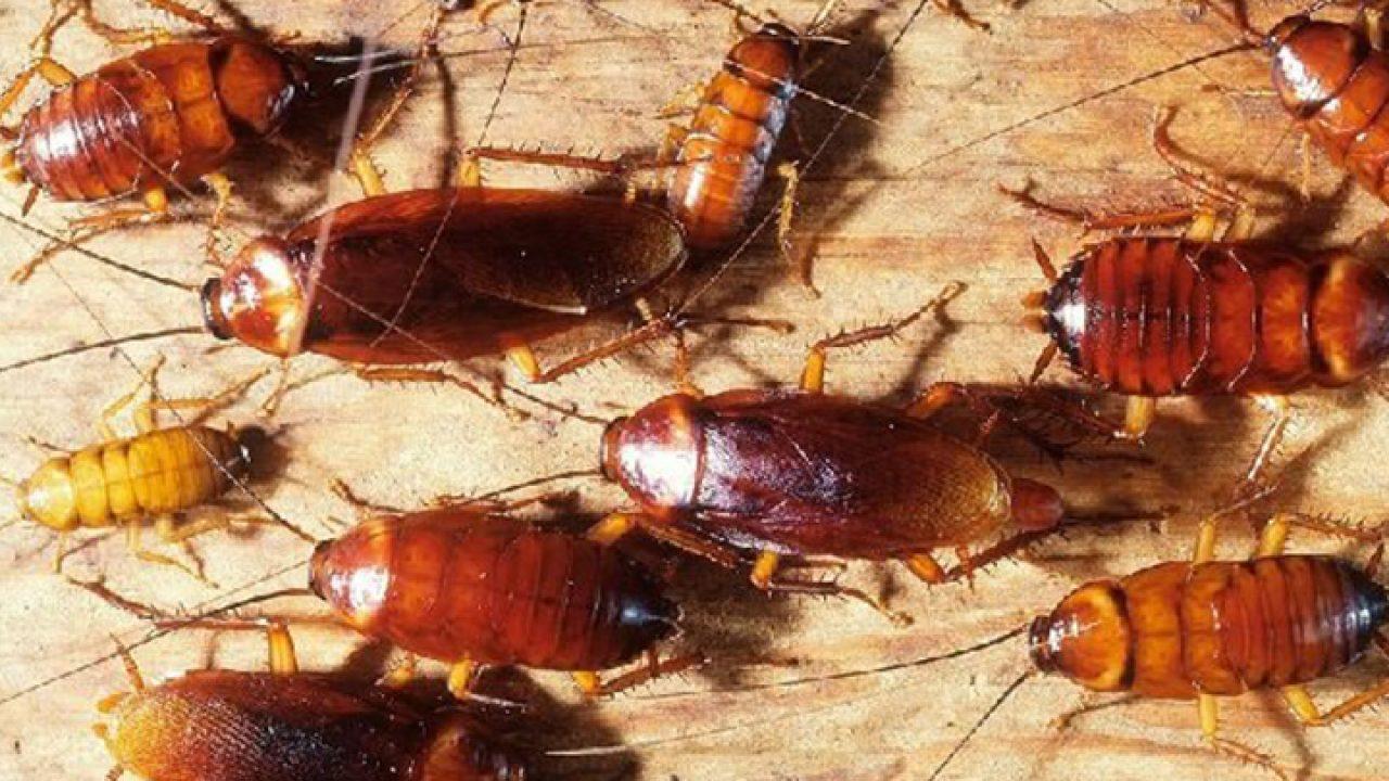صورة سبب وجود الصراصير في غرفة النوم , كيف اعتنى بحجرة نومى من الحشرات