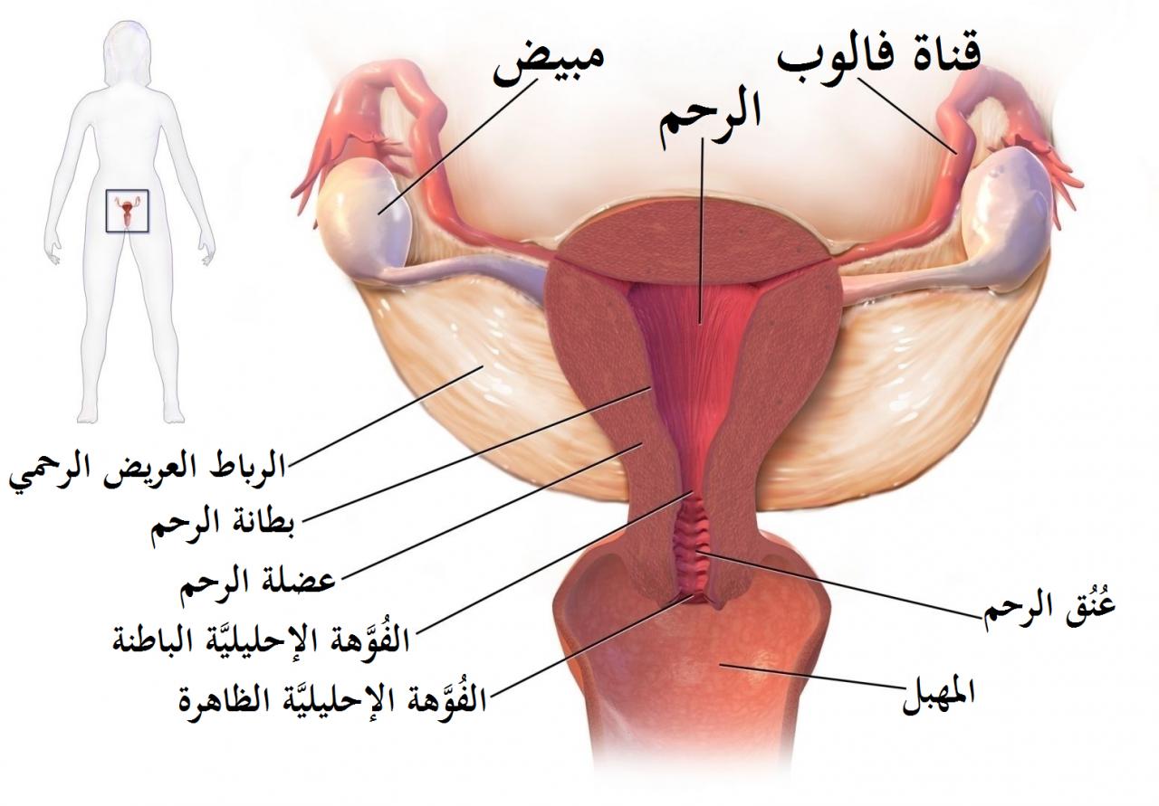 صورة الحمل خارج الرحم والدورة الشهرية , اخطار تتعرض لها الحامل اثناء الحمل