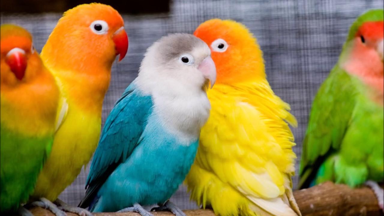 صورة تفسير الاحلام طيور , ما هو تاويل رؤية الطيور في المنام