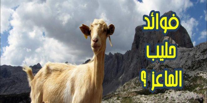 صورة فوائد حليب الماعز للبشرة , حافظي على نضارة بشرتك بحليب الماعز