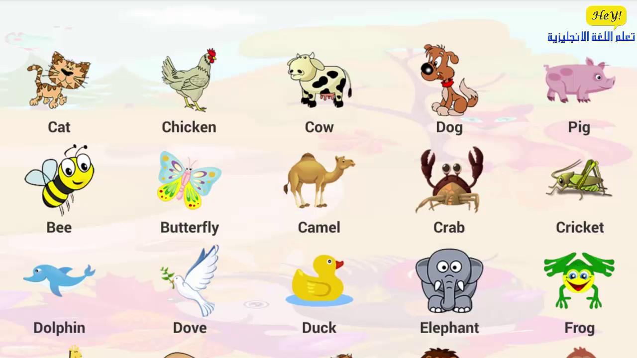 صورة اسامي الحيوانات بالانجليزي , دليل اسامى الحيوانات بالانجليزى