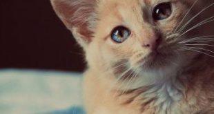 صورة حلم في القطط , القطط في المنام خيرها وشرها