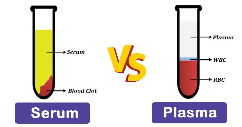 صورة الفرق بين المصل والبلازما , تعرف على الاختلاف البسيط