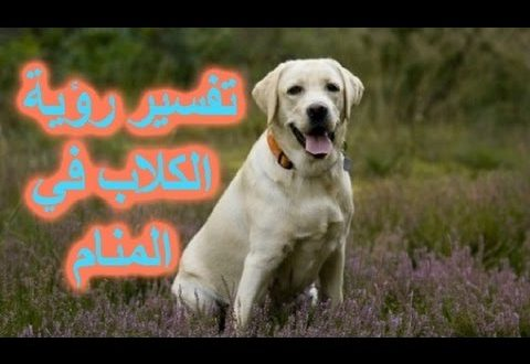 صورة رؤية الكلاب في المنام لابن سيرين , تفسير الكلب في الحلم هتستغربه جدا