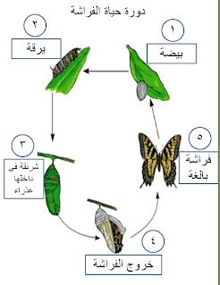 صورة معلومات عن الفراشات مع الصور , احلي و الطف الحشرات