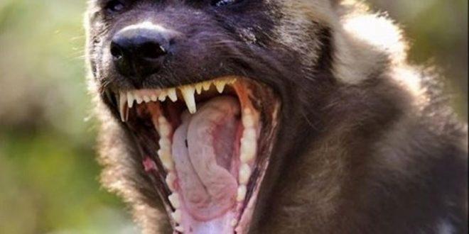 صورة اسماء حيوانات مفترسة , اخطر حيوانات مفترسه في العالم
