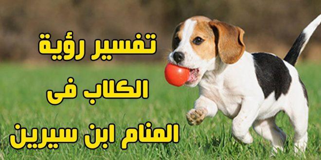 صورة ما تفسير رؤية الكلاب في المنام , الكلاب دليل علي الخبث والنفاق والشر