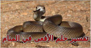 صورة تفسير الاحلام عضة الثعبان , معني قرصه الافعي بالتفصيل