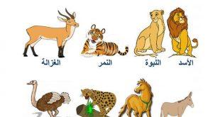 صورة التنقل عند الحيوانات , لا يفوتك سبب انتقال الحيوان