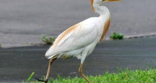 صورة اسماء طيور من 10 حروف , طائر لقب بالعديد من الاسماء