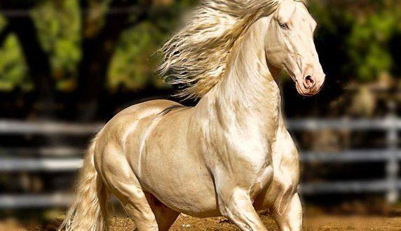 صورة اجمل الصور حصان في العالم , خير الجياد صور