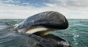 صورة صور حيتان على البحر , صورة للبحر و جماله