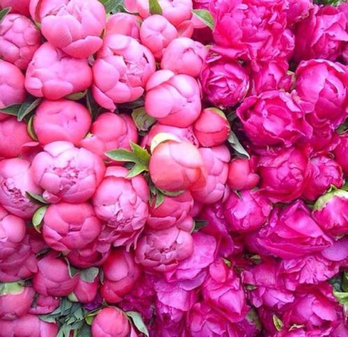 صورة ورد جميل جدا , معلومات مفيده هتفاجئك عن الورد