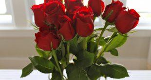 صورة اجمل صورة وردة , ارق الورود في العالم