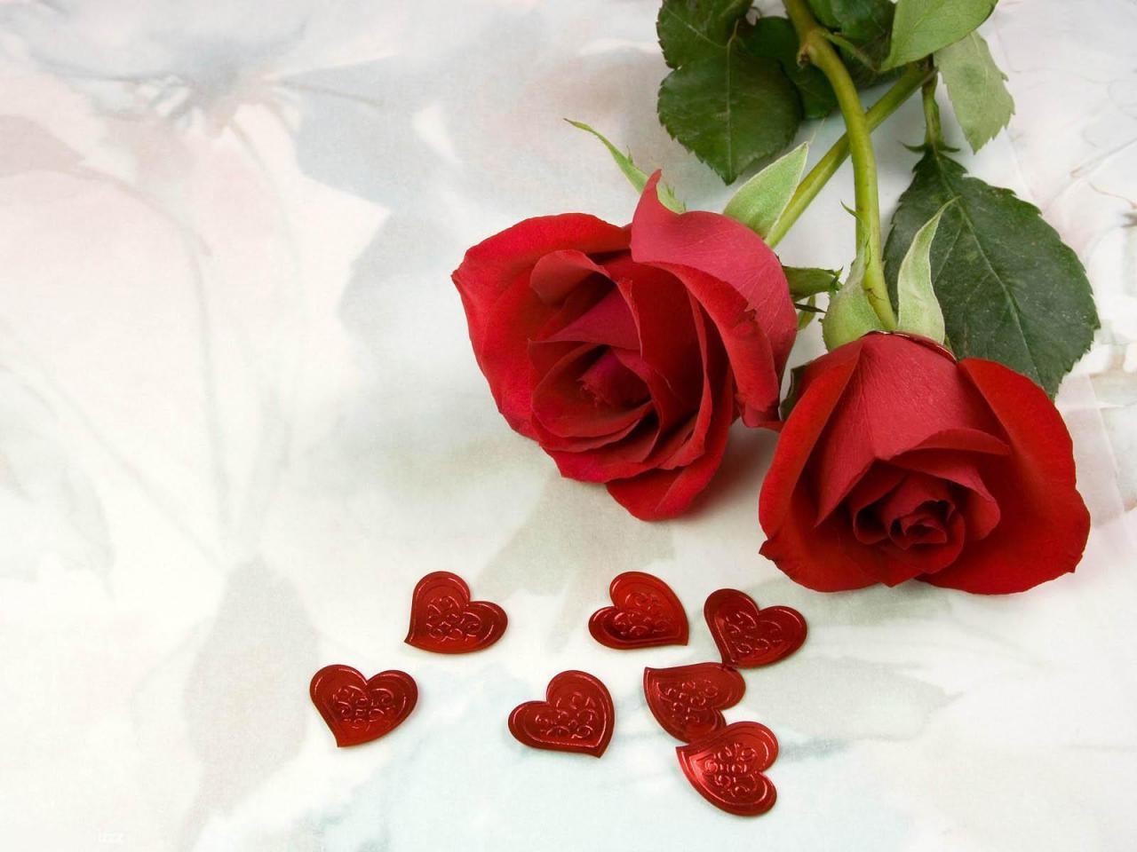 اجمل وردة في العالم 2 The