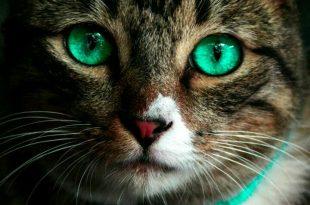 صورة صور حيوانات hd , شاهد اجمل صور حيوانات