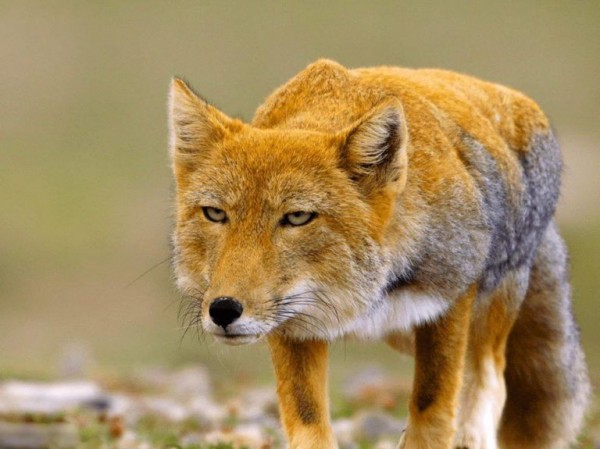 صورة حيوانات يغطي جسمها الشعر , معلومات عن حيوانات يغطي جسمها بالشعر