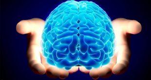 صورة صور عن المخ , معلومات عن المخ