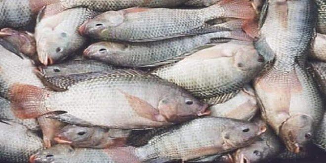 صورة تنظيف السمك في المنام , تفاسير احلام تخص السمك