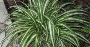صورة موسوعة نباتات الزينة بالصور , احلي النباتات اللي بتحلي البيت