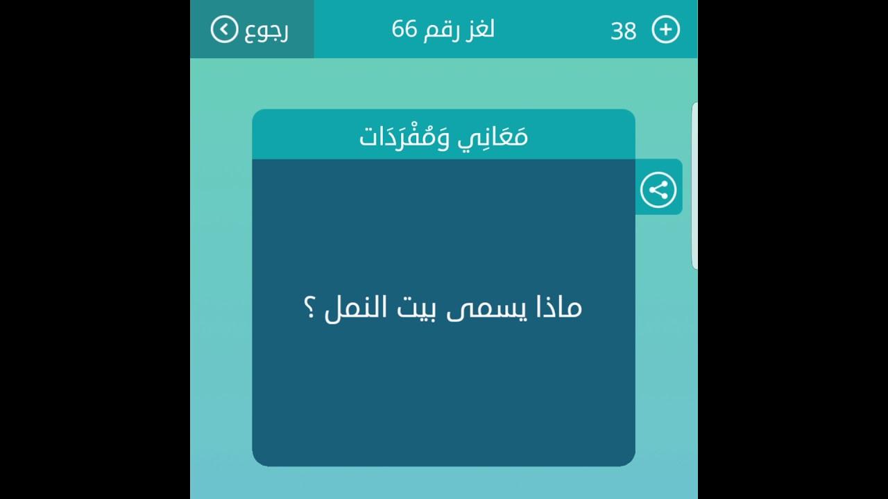 صورة مااسم بيت النمل , العب و جمع معلومات