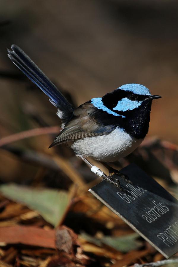 صورة طيور الحب تتكلم , طيور الجمال