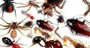صورة القضاء على الحشرات في المنزل , اسرع طريقه للتخلص من الحشرات في المنزل