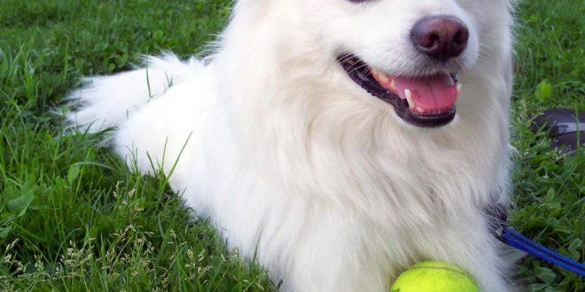 صورة صور اجمل كلاب , الي كل عشاق الكلاب اليكم الصور