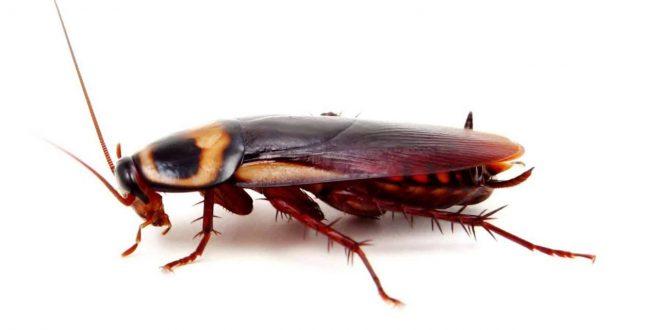 صورة تنظيف المطبخ من الصراصير , طريقه فعاله للتخلص من الصراصير