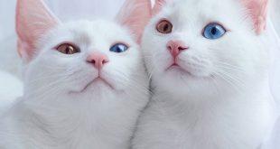 صورة تفسير حلم رؤية القطط، القطط في الرؤيا!